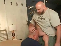 Gay bears fat and horn... video