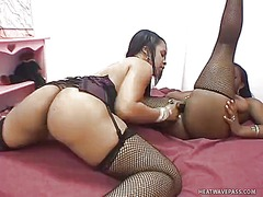 Horny black lesbians in kinky stockings pleasure each other's cunt